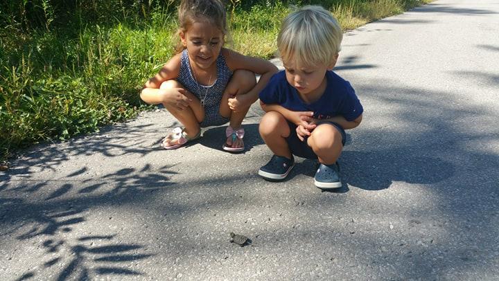 turtle hatchling kids